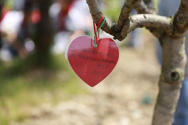 植完树后,我们每个人都和自己种的树合影,最后我们班级在这一片桃树林